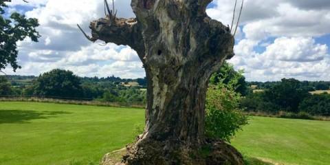 Polstead gospel oak